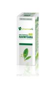 Huile essentielle Bio Ravintsara  à Moirans